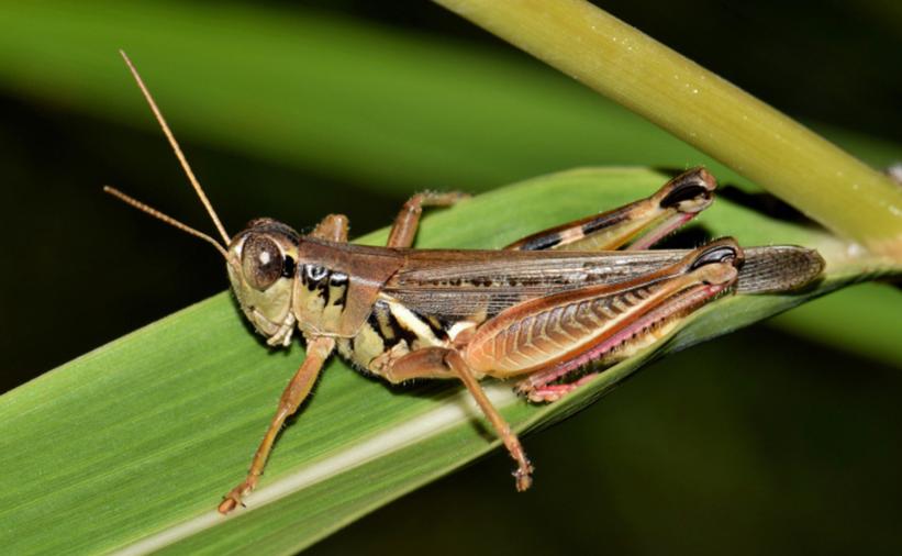 Il est crucial de tuer les insectes avant la mousson pour stopper la deuxième vague de Covid-19